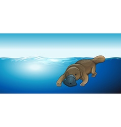 Platypus swimming in the sea vector image