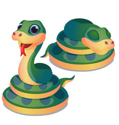 Cute curled up green snake isolated on white vector