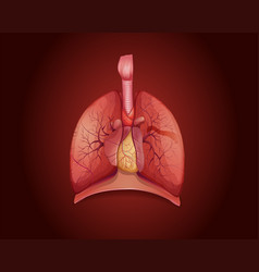 Diagram showing lungs with disease vector