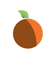 orange healthy food shadow vector image