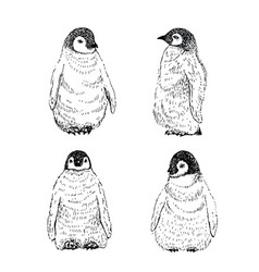penguin sketch hand drawn vector image