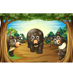 Bears and jungle vector