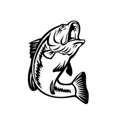 bucketmouth bass swimming down black and white vector image