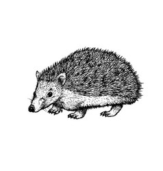 Hand drawn hedgehog black white sketch vector