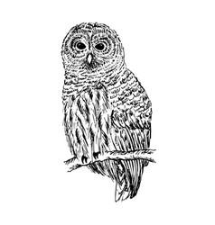 owl sketch hand drawn vector image