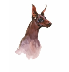Doberman animal dog watercolor vector