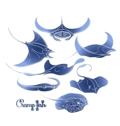 Graphic cramp fish collection vector