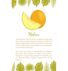 melon exotic juicy stone fruit poster text vector image