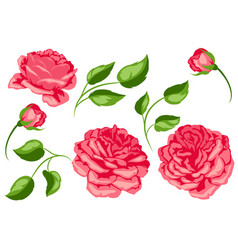 Set of red roses beautiful decorative flowers vector