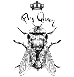 fly insect with crown vector image