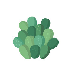 Cactus and succulent colorful cartoon vector