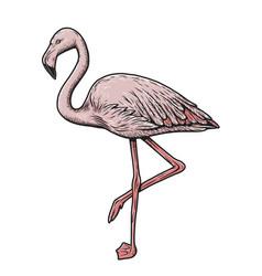 Exotic animal bird pink flamingo hawaii element vector
