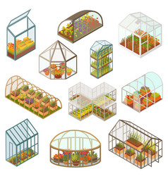 Greenhouse isometric growing vector