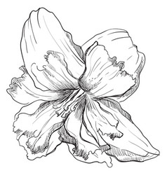 hand drawing flower 8 vector image