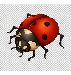Ladybug in fine details vector