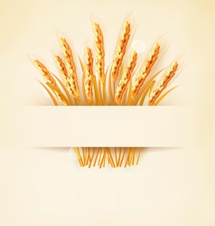 Ears of wheat on old paper background vector image