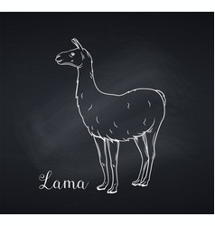 Lama outline icon chalkboard style vector