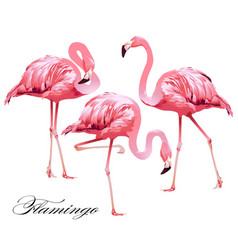 Print flamingos vector