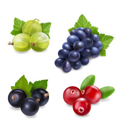 Berry fruit realistic set with isolated vector