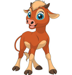funny little calf vector image