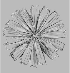 Grey flower 2 vector