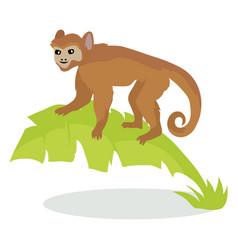 monkey cartoon icon in flat design vector image
