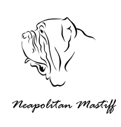 Neapolitan Mastiff vector image