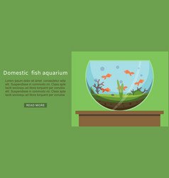 domestic fish aquarium with golden fishes vector image