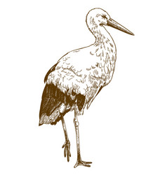 Engraving drawing of stork vector