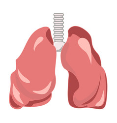 Human lungs and trachea organ isolated design vector