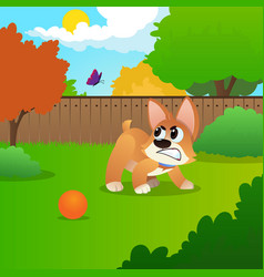 Little corgi standing on green meadow and growling vector