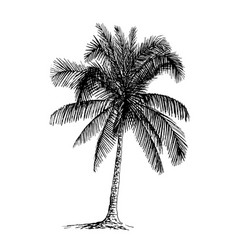 Palm sketch hand drawn vector