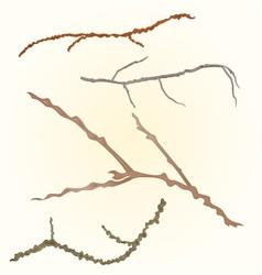 Sprigs- twig tree various branch vector
