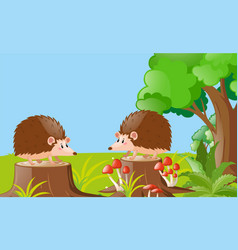 Two hedgehogs in the garden vector