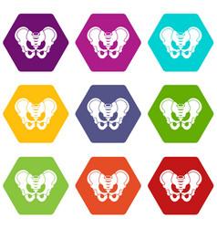 pelvis icon set color hexahedron vector image