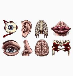 Anatomy human bones and muscles set organ vector