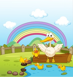 Ducks and a rainbow vector image