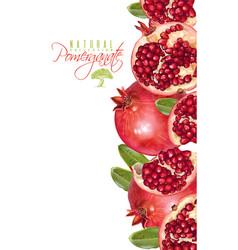 Pomegranate vertical banner vector