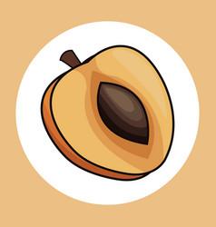 Slice apricot healthy fresh image vector