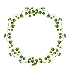 border green leaves with creepers vector image