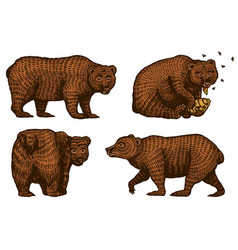 grizzly bears hunting brown wild animal eats vector image