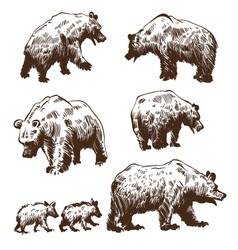 Hand drawn bears set vector