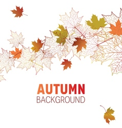maple leaf contour background vector image