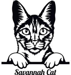 savannah cat - cat breed cat breed head isolated vector image