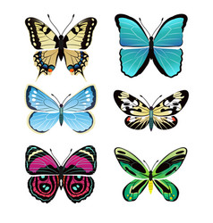 Butterflies types collection vector