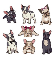 Funny puppies french bulldog vector