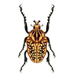 Goliath beetle vector