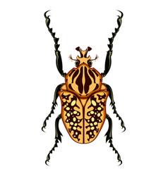 Goliath beetle vector
