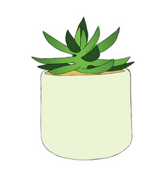 hand drawn succulent flower in the pot vector image