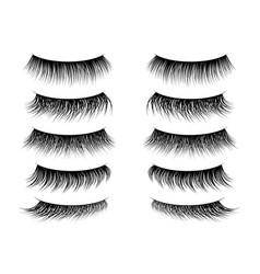 Lashes false realistic fake eyelashes collection vector